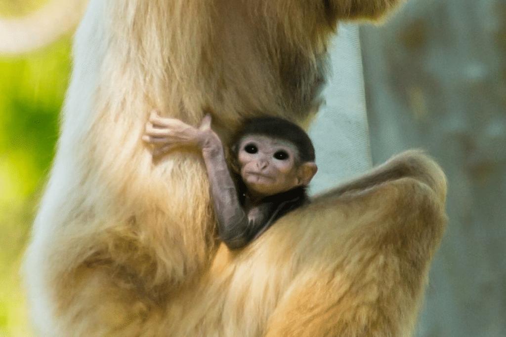 The Philadelphia Zoo Welcomes Many Baby Animals