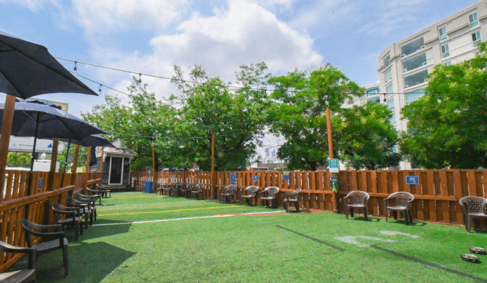 Philly's First Dog Park Beer Garden Is Here & They Serve Dog Mocktails
